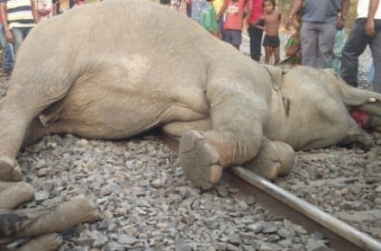 Train runs over four elephants in Odisha